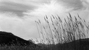 Ταπεινός Παράδεισος: Έκθεση της Ευγενίας Κουμαντάρου στο Μουσείο Μπενάκη